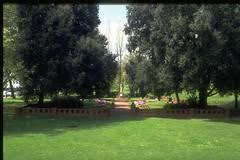Adel 2 trees 1